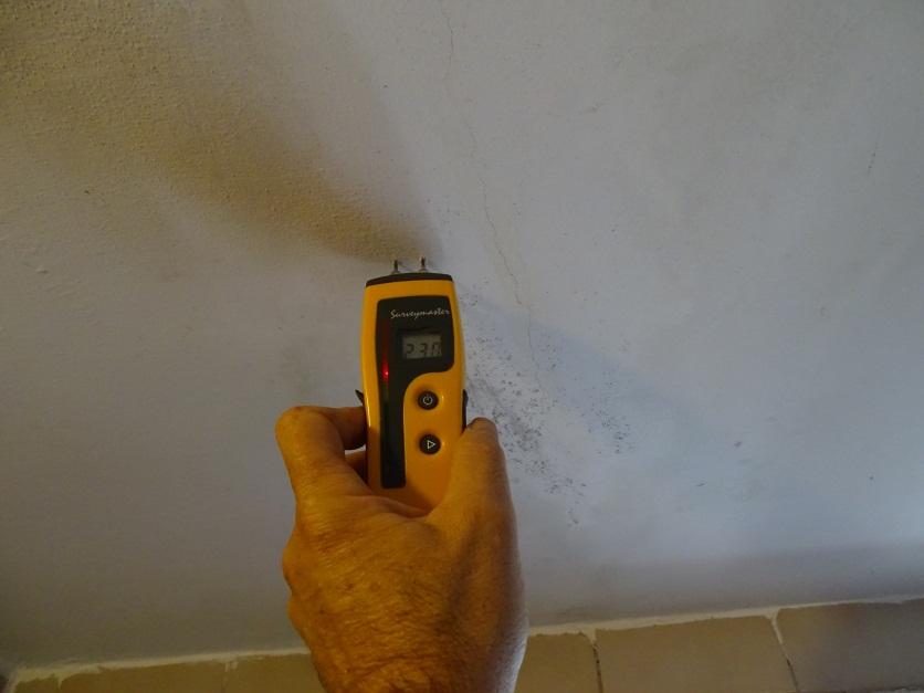 עובש בקירות ובתקרה