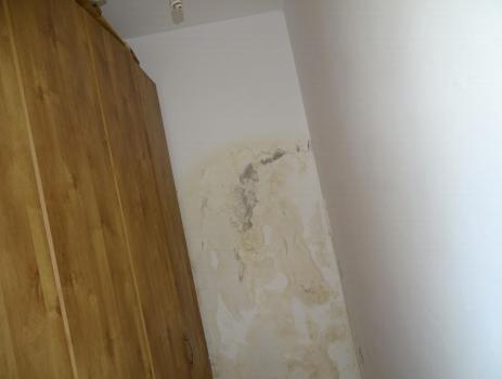 בדק בית - עובש רב בקיר חיצוני